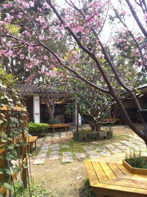 舒服的戶外庭院,櫻花也開的很漂亮