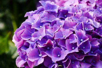 ♥~珍妮佛的花草呢喃~♥